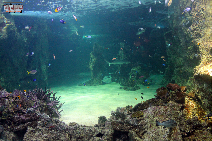 sydney acuarium.jpg